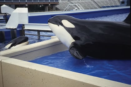SeaWorld fails to see the point as expansion plans are revealed