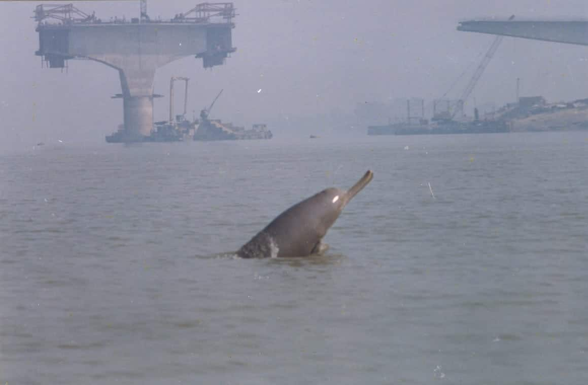 River dolphin killed by poachers in India