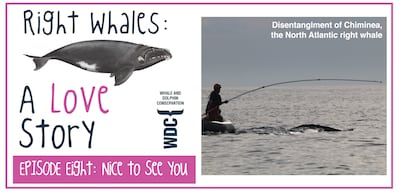 Right Whales: A Love Story- Nice to See You Again