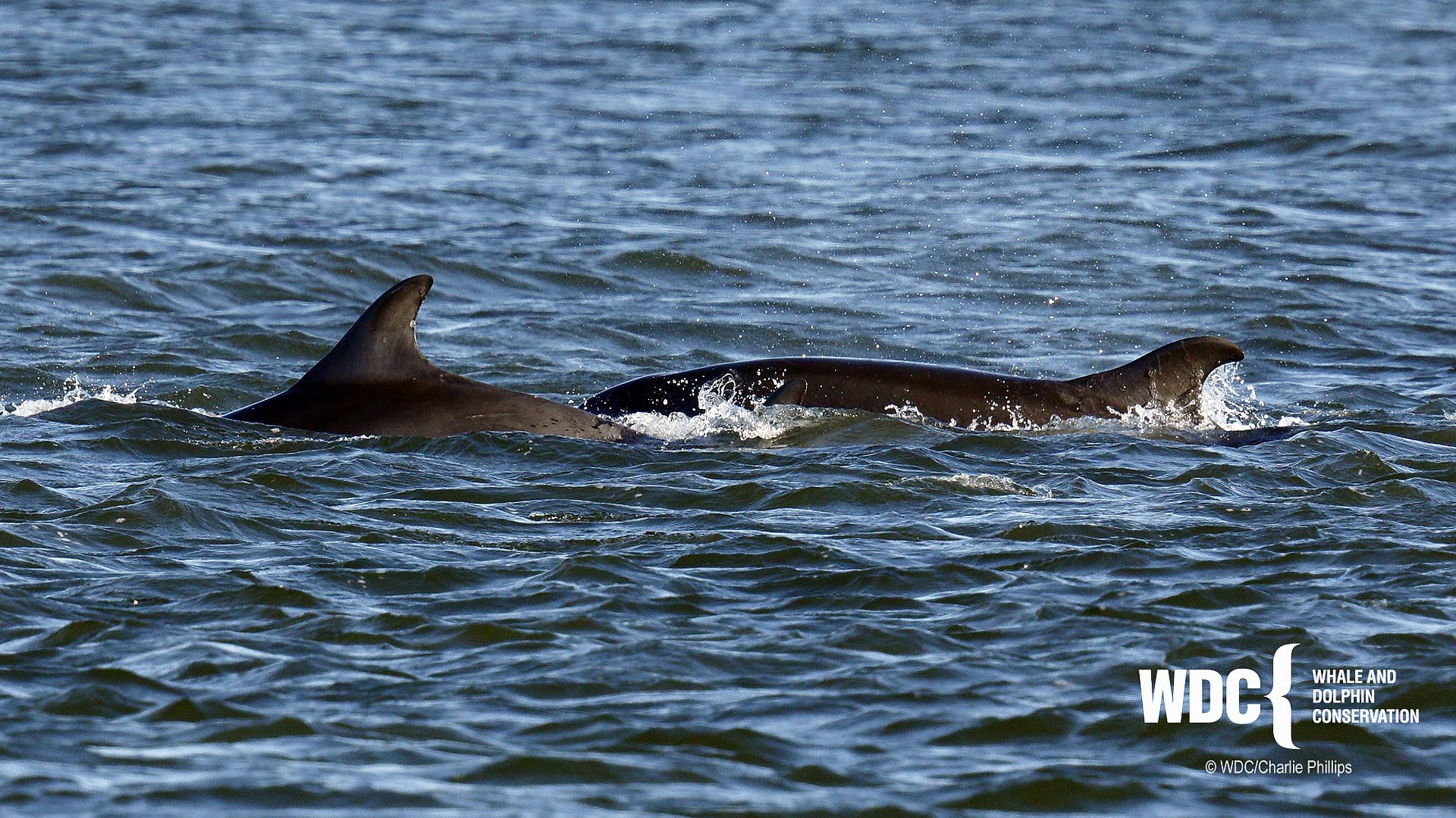 Dolphin Sightings Update - Whale & Dolphin Conservation USA