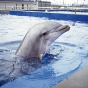 Process fails dolphins in Bruges