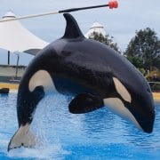 TUI Germany to end support for whale and dolphin captivity?