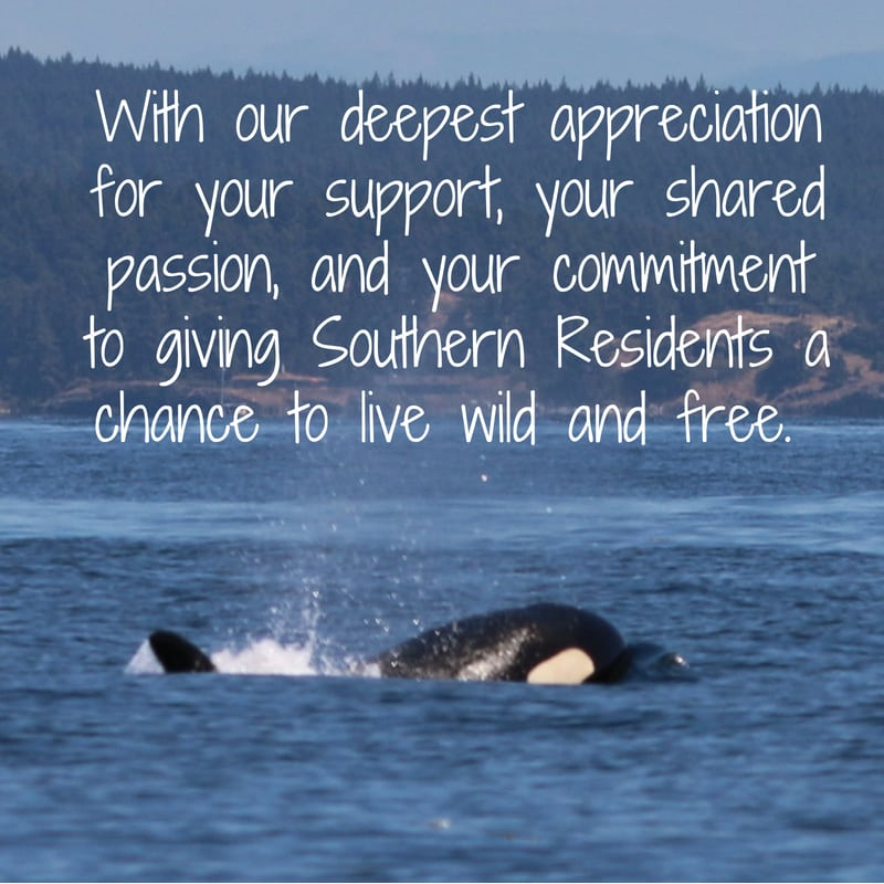 What we can do to save Southern Resident orcas