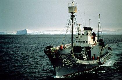 Walfang in Norwegen erreicht neuen Rekord
