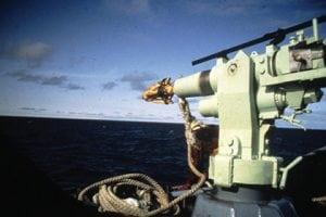 In Island hat die Jagd auf Zwergwale wieder begonnen