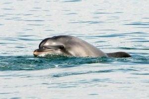 Zwei Unglücksfälle mit Delfinen vor Mallorca