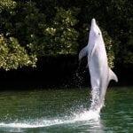 Port River Delfine