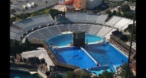 SeaWorld nimmt Stehen und Surfen auf Delfinen aus dem Programm