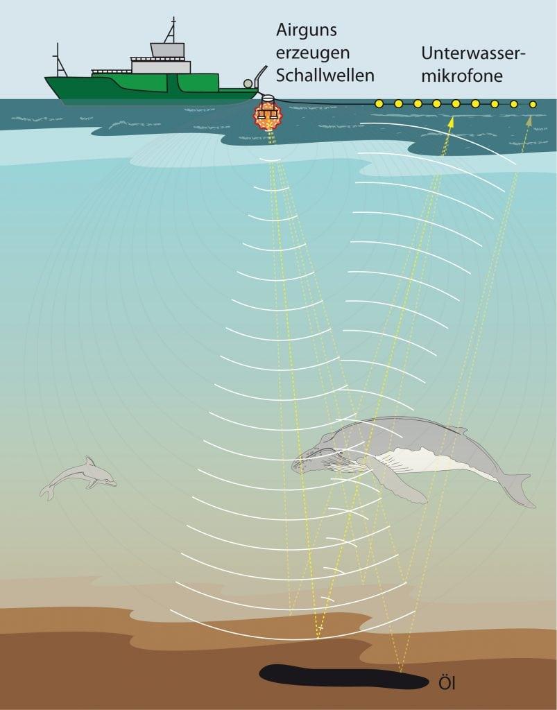 Schweinswale unter Beschuss