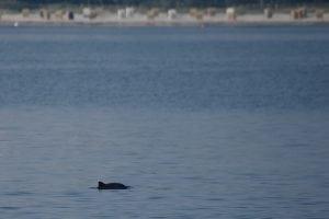 Streitfall Meeresschutz – Umweltorganisationen verklagen Bundesregierung
