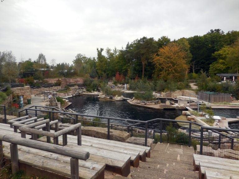 Tiergarten Nürnberg: keine Delfinzucht während Bauarbeiten?