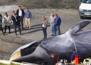 Kristján Loftsson bestätigt, dass Fischereigelder seinen Walfang finanzieren