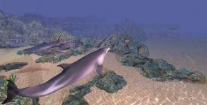 Virtuelle Zoos: eine humanere Zukunft für Wale und Delfine dank neuer Technologien?