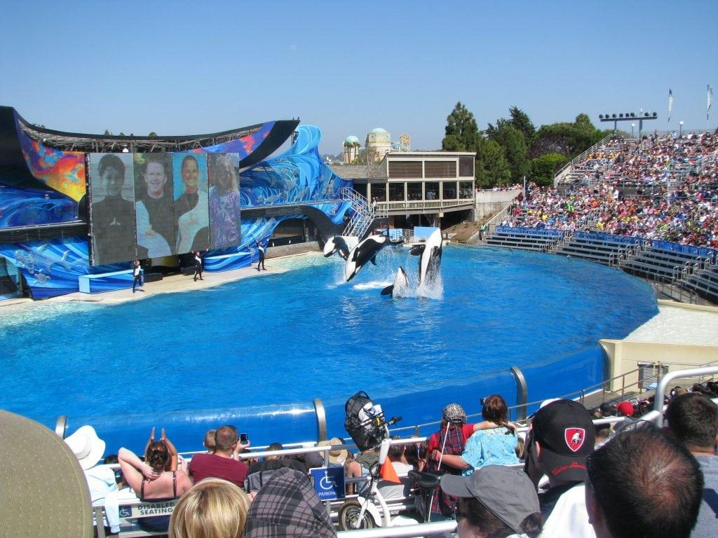 Erfolg: Virgin Holidays stoppt Kartenverkauf für SeaWorld