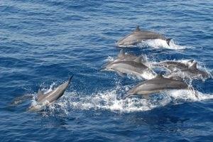 Sri Lanka: Zahlreiche tote Delfine durch illegale Fischerei