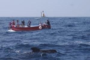 Begegnungen mit Walen und Delfinen vor der Kanareninsel La Gomera