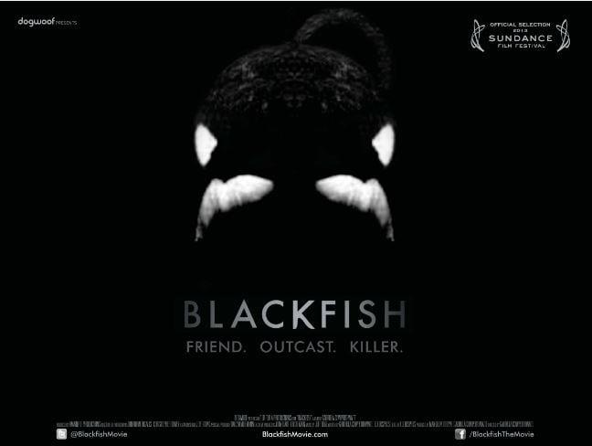 Blackfish vs. Nürnberg: mein Praktikum bei WDC