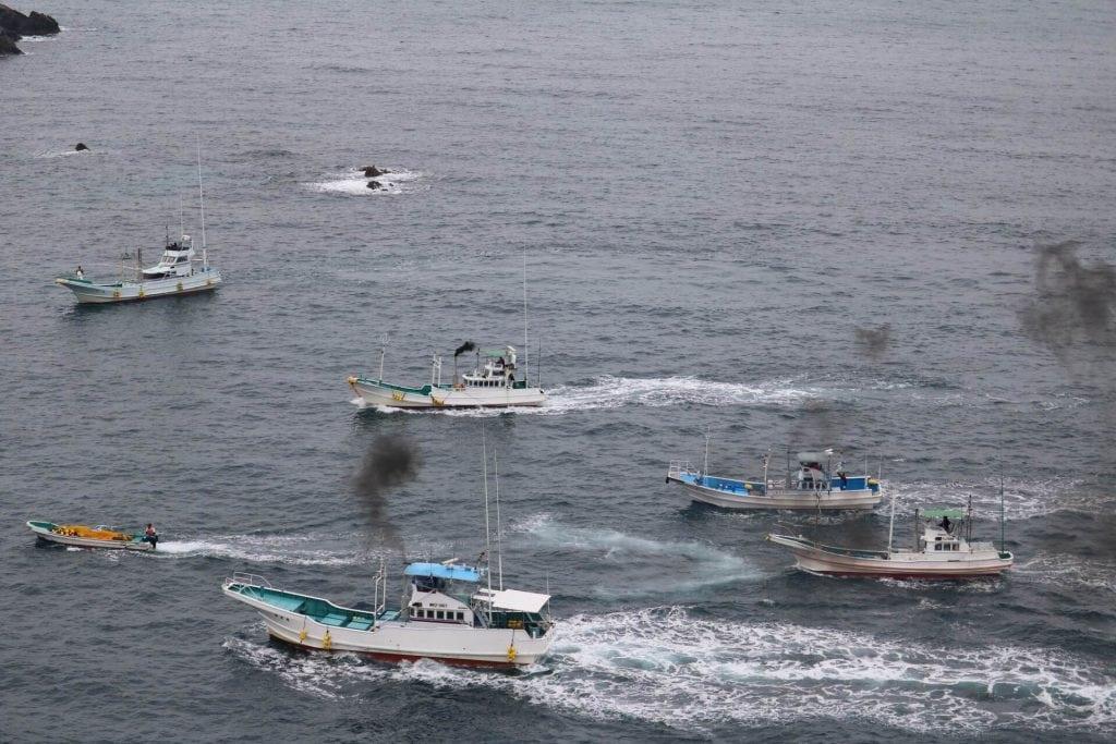 Tagebuch aus Taiji: Nicht schon wieder! Noch eine Treibjagd…