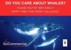 Umfrage zu verantwortungsbewusster Wal- und Delfinbeobachtung