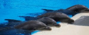 Umstrittenes Delfinarium in Arizona schließt nach mehrfachen Todesfällen