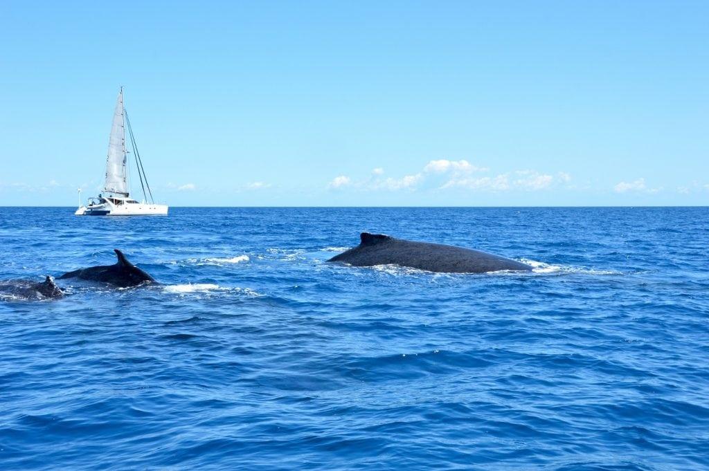 shutterstock_whale-watching_katjana_cabenda-web