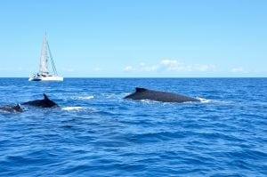 WDC wird Partner beim Walflüsterer