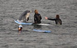 WDC besucht den Ostsee-Delfin!