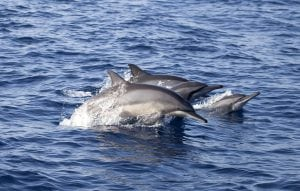 Sri Lanka bekämpft den illegalen Verkauf von Wal- und Delfinfleisch