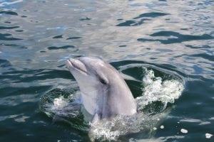 Delfin in der Lübecker Bucht gesichtet