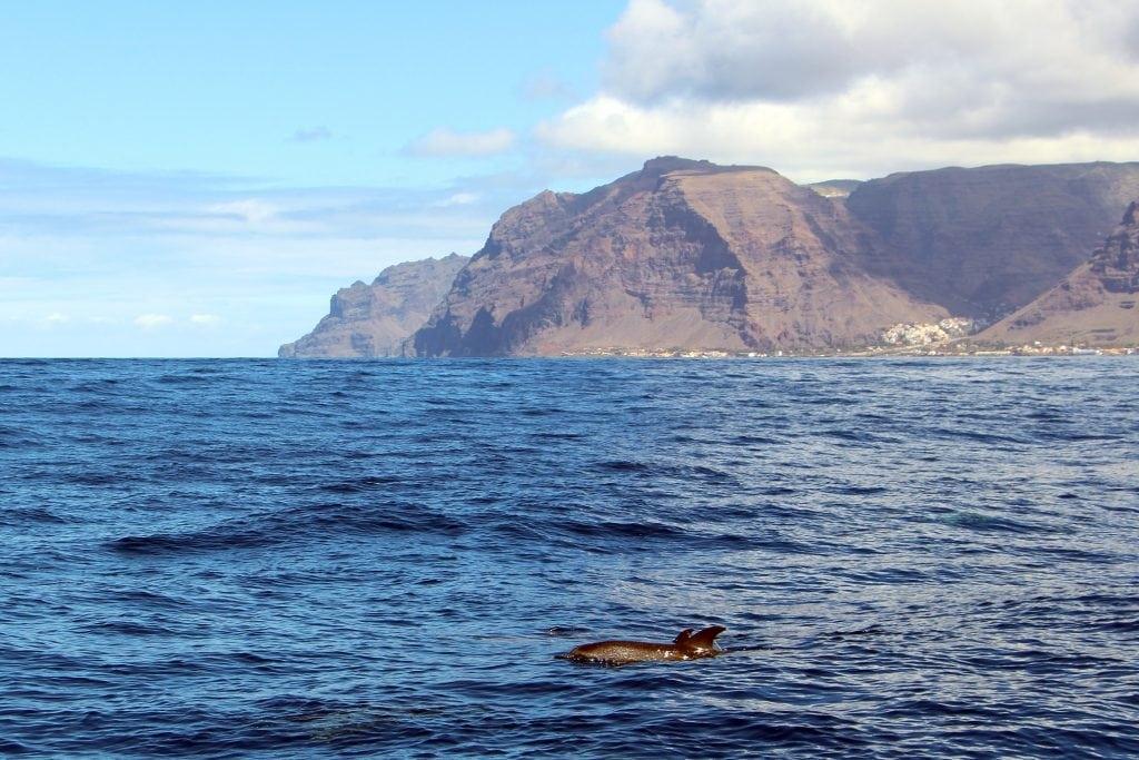Kanarische Inseln zum Hope Spot erklärt