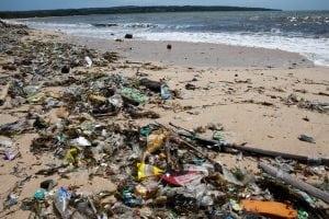 Schwangerer Pottwal strandet in Italien mit 20 Kilo Plastik im Magen