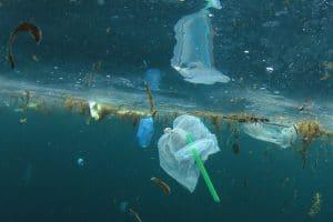 Jeder Wal und Delfin vor Großbritannien hat Mikroplastik im Magen