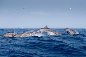 Delfinschutz zu Weihnachten