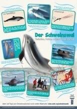 Schweinswal-Lernposter