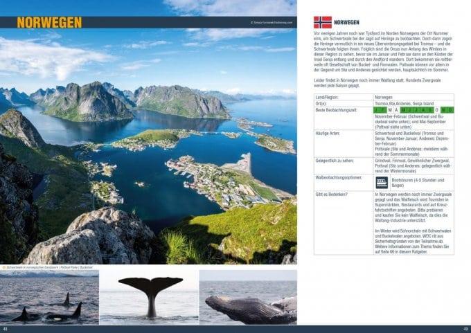 WDC-Ratgeber Walbeobachtung: Norwegen