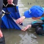 wdc-dolphin-rescue