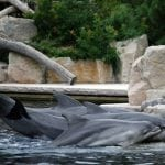 Delfinlagune Nürnberg