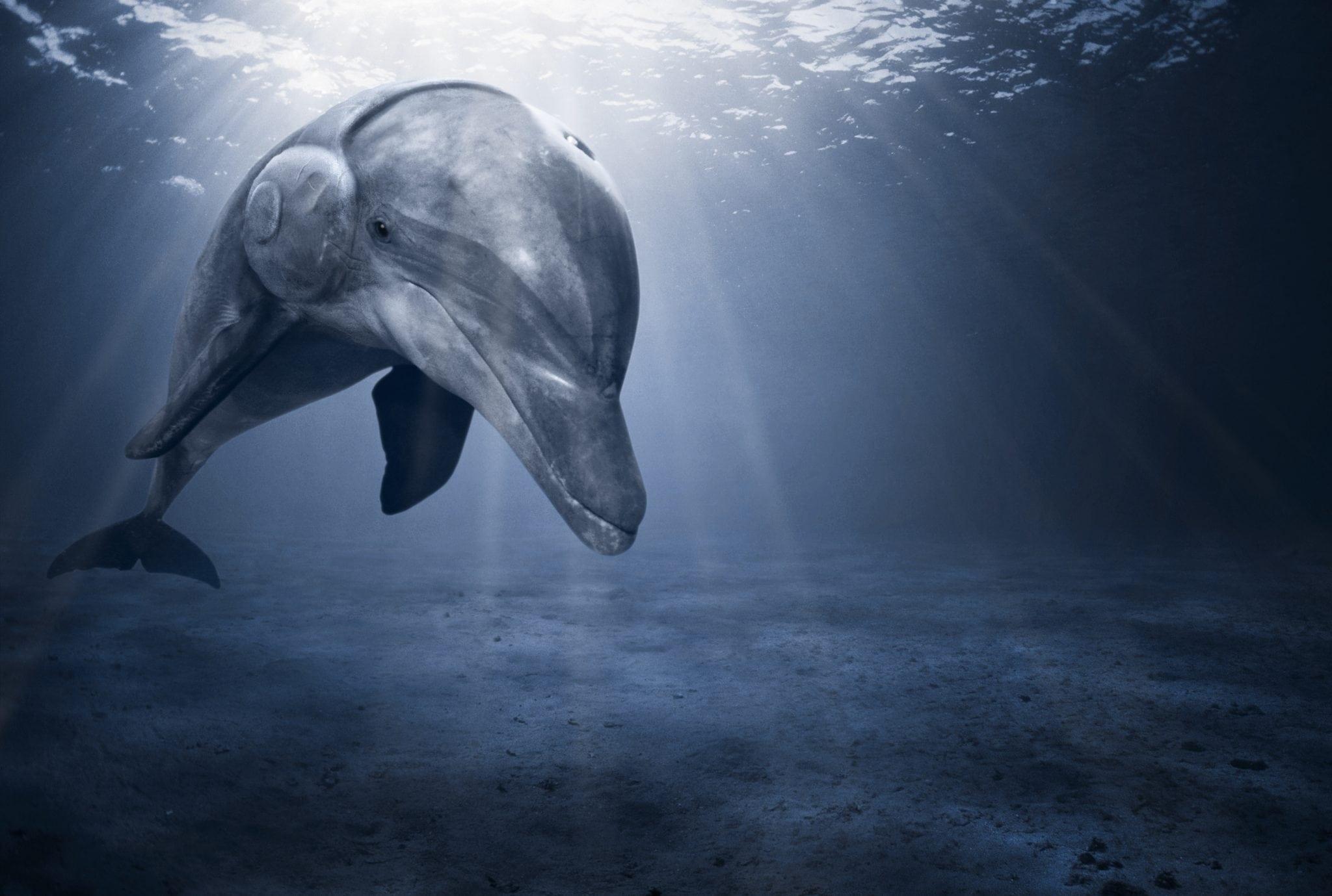 Kopfhoerer Delfin Lärm