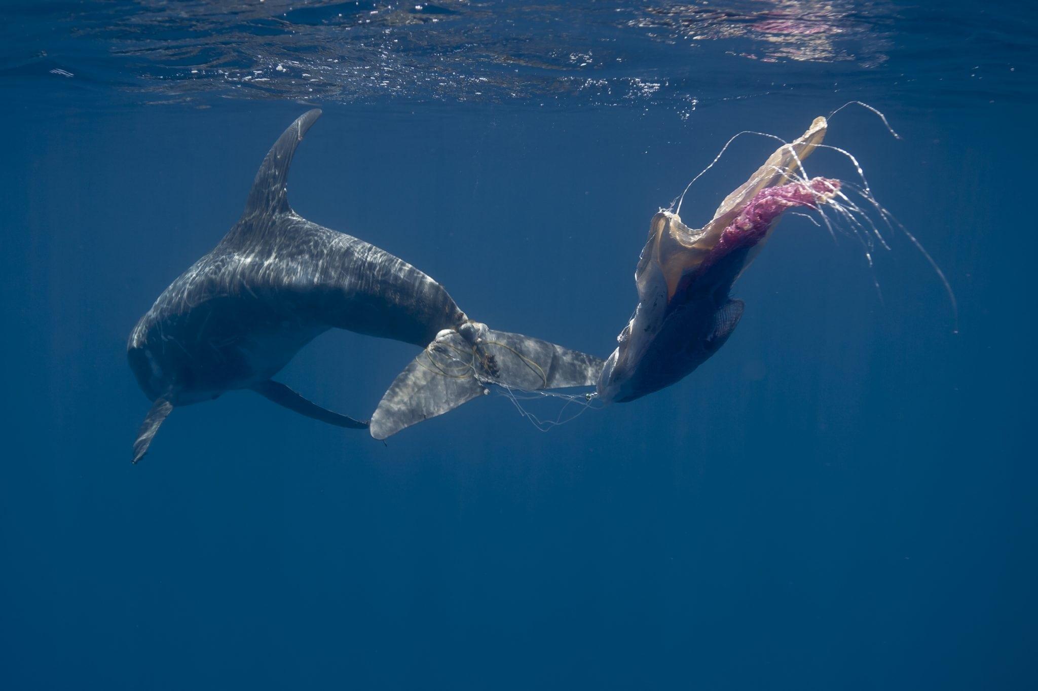 Sri Lanka Rundkopfdelfin Plastik