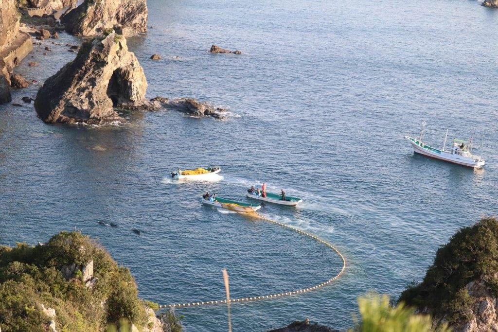 Japans Walfangschiff kehrt leer zurück – doch in Taiji geht die Jagd weiter