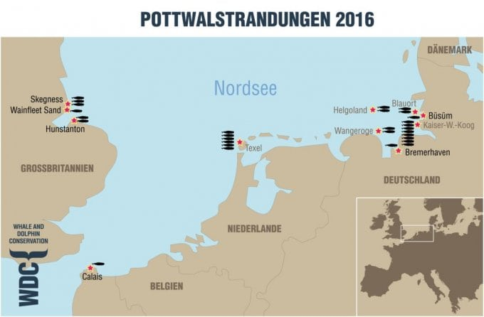 Pottwalstrandungen in der Nordsee