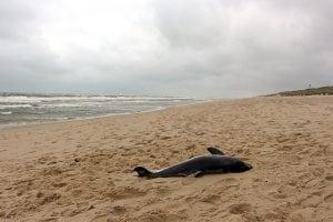 Tote Schweinswale – Wann ist das Fass leer?