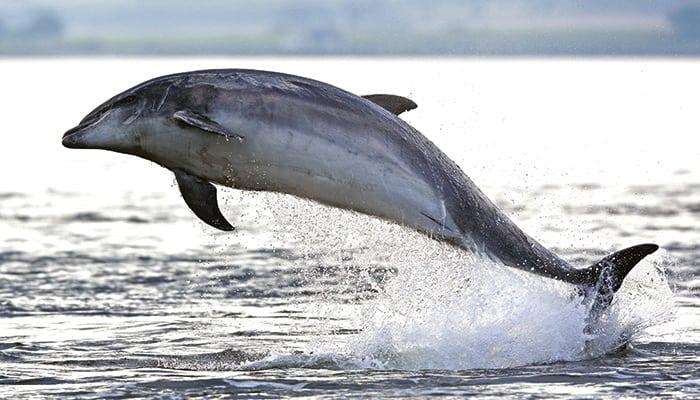 Delfin Speedy