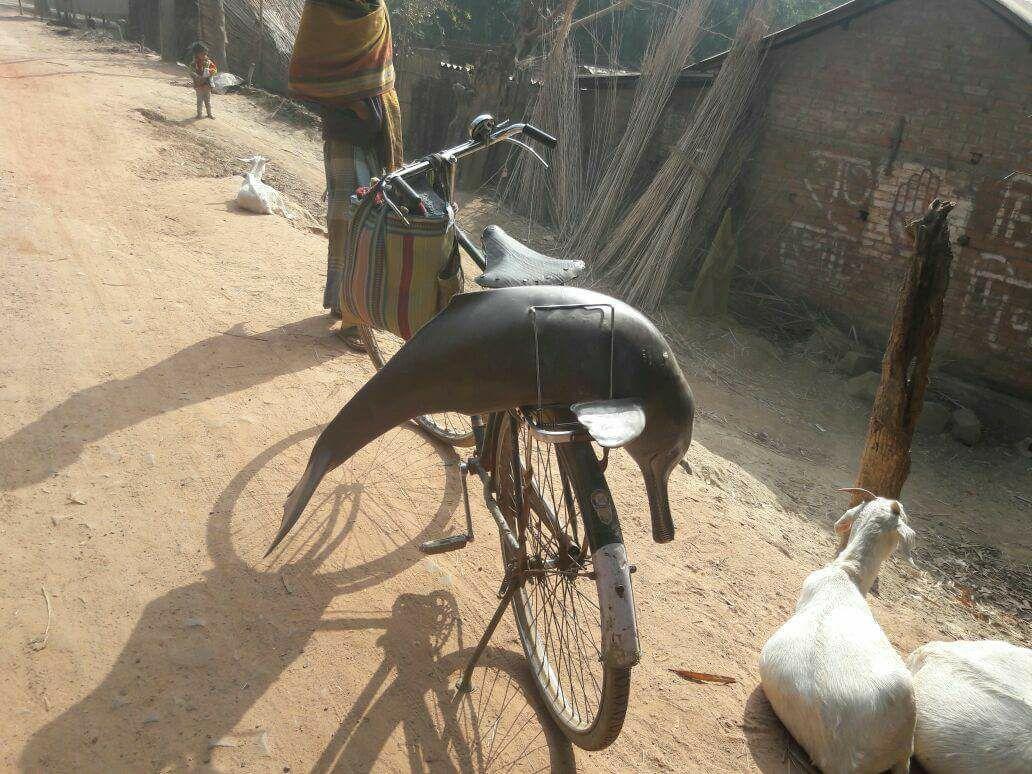 Toter Delfin in Indien