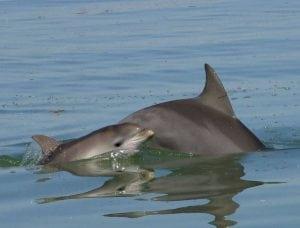 Wo leben Delfine?