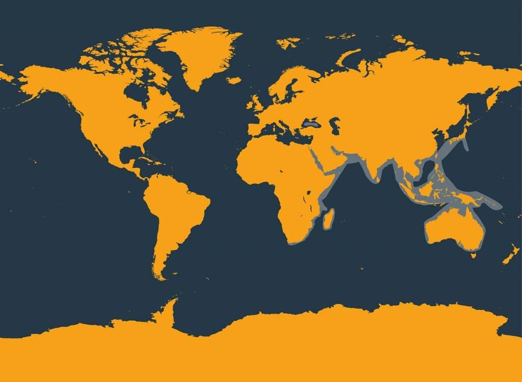 indopazifischer grosser tuemmler map