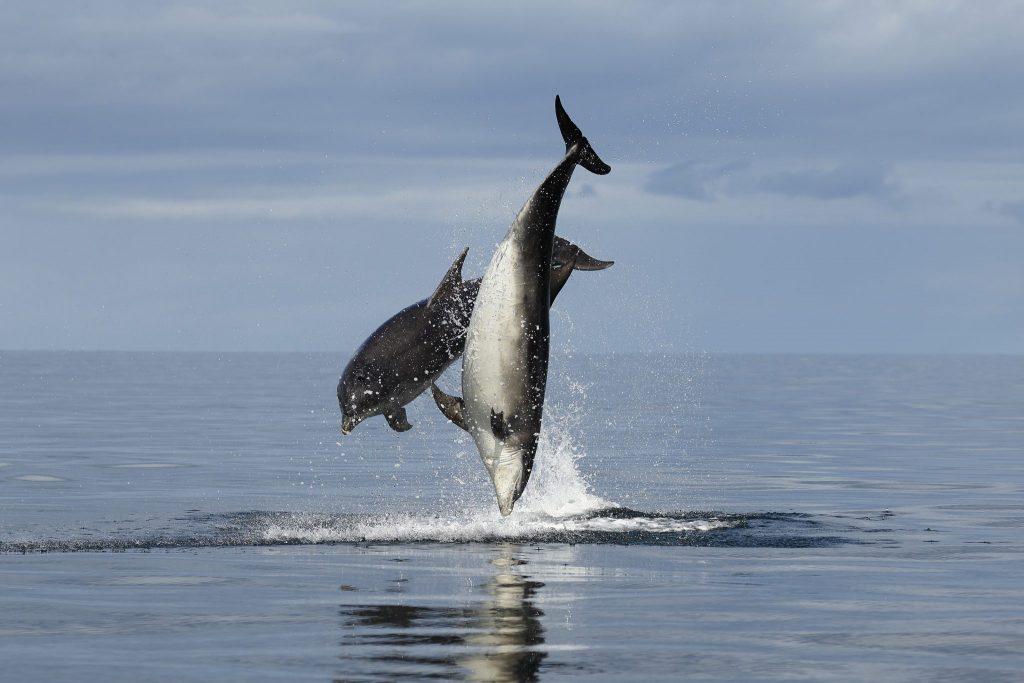 Wie intelligent sind Delfine?