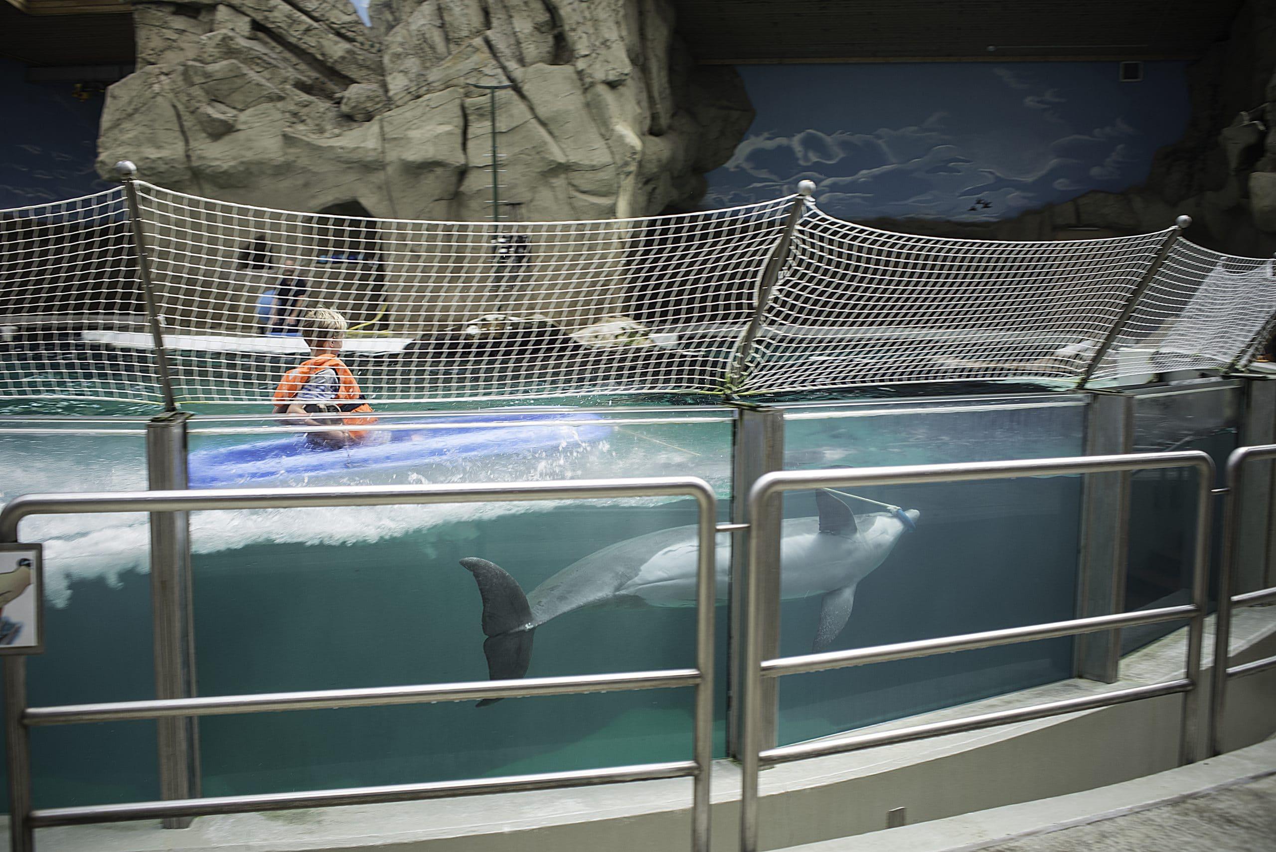 Delfinarium-Duisburg Kind wird von Delfin gezogen