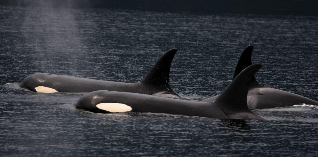 Trauern Wale und Delfine um ihre Artgenossen?