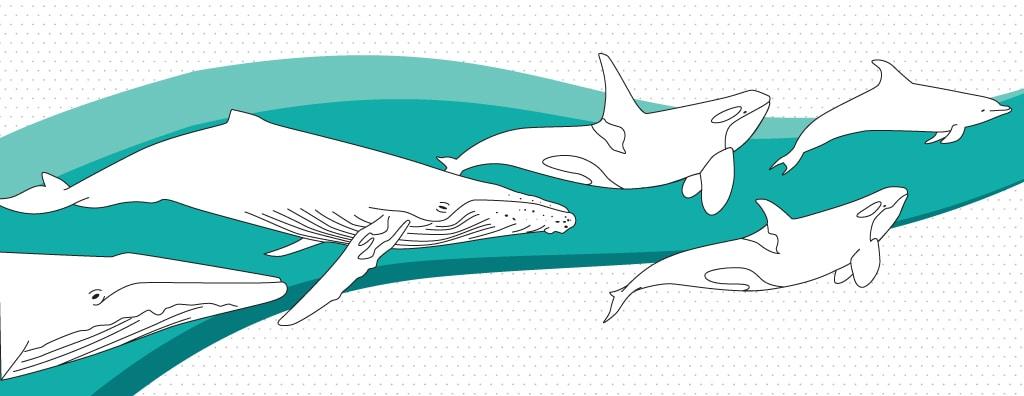 Identifikation von Walen und Delfinen